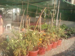 Terrace Garden in Mumbai