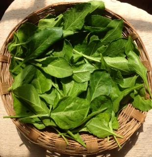 Spinach_basket