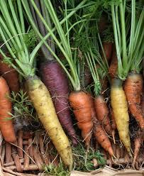 Carrot_harvest