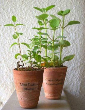 Indian Herb Set (Mint+Carom) in Unglazed Terracotta Clay - Rs 400 per set - a Green Gift by Mandy's Farm
